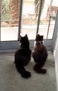 2 cats screen